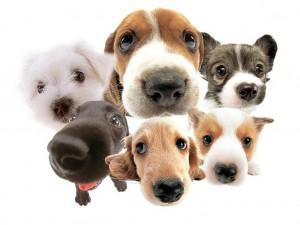Dog License