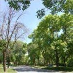 EAB Damaged Trees